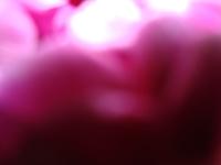 Foto/Print